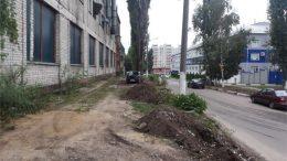 Воронеж деревья