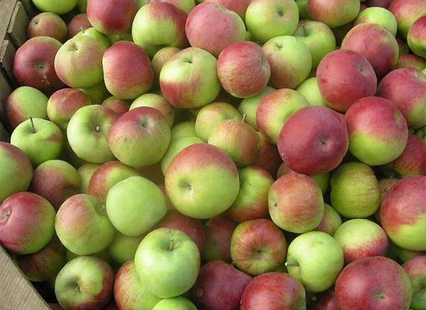 Яблоки Острогожск
