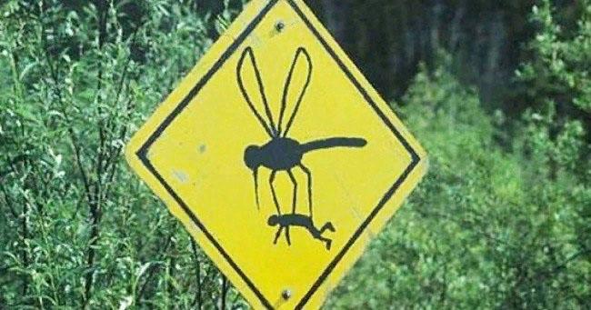 комары Воронежская