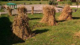 День сельхозработника