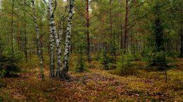 лес экология